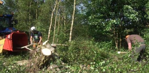 Tree Felling Birmingham, Tree Removal Birmingham