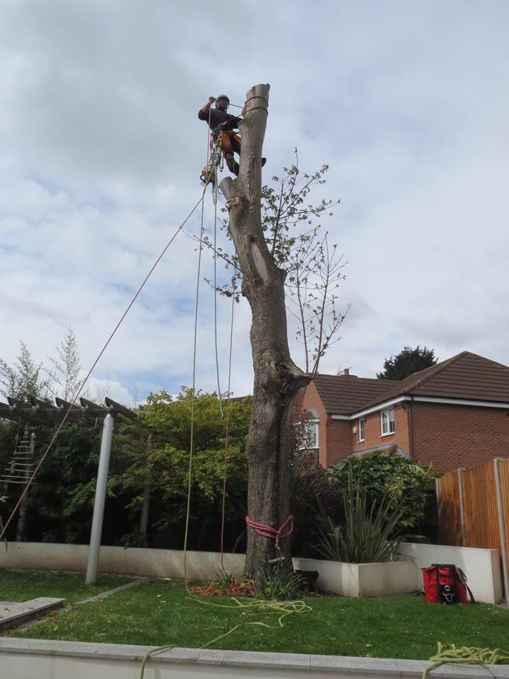 gaz tree surgeon birmingham